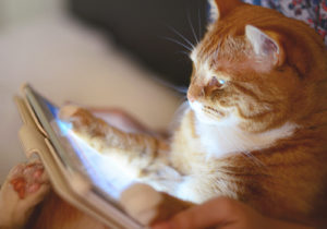 cat holding an ipad