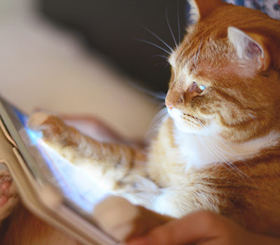 A woman holding a cat while using a tablet device