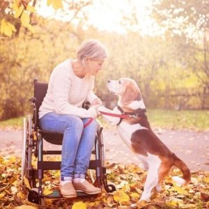 woman in wheelchair holding a dog's paws